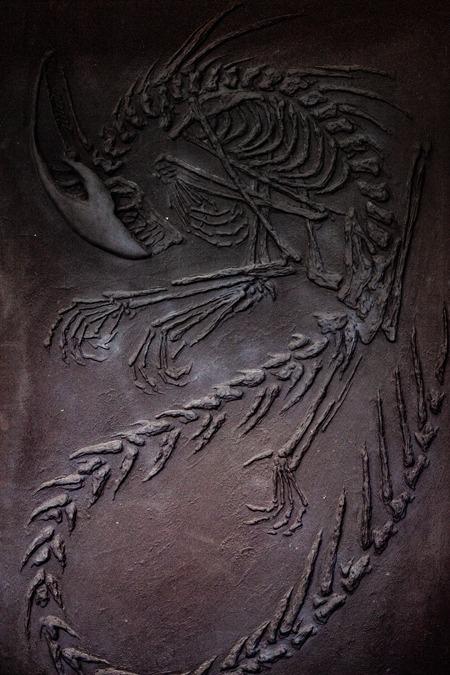 """Fossile de Xénomorphe"" Romain Lardanchet"